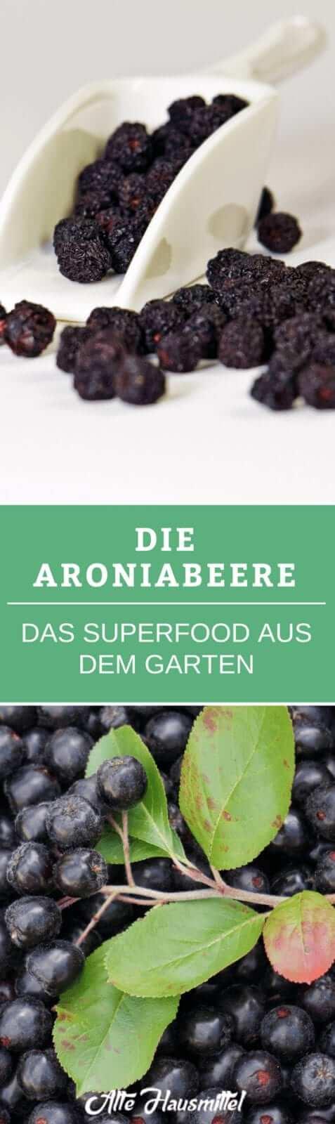 Die Aroniabeere - Das Superfood aus dem Garten