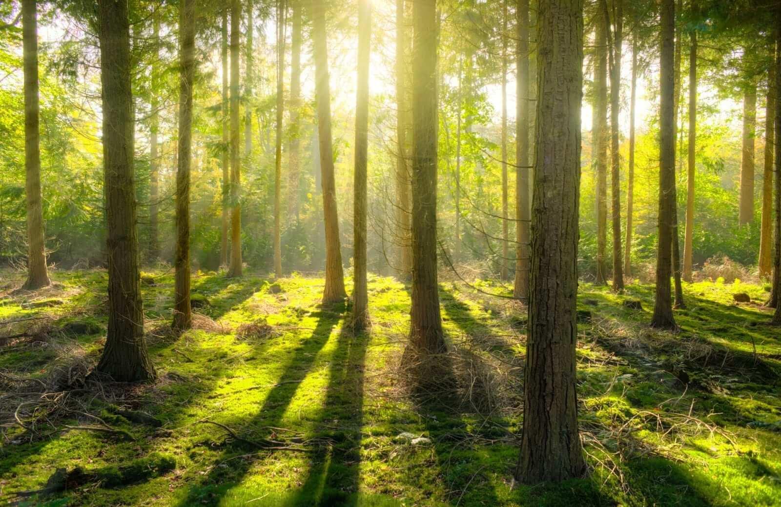 Sonne Licht gegen Winterdepression