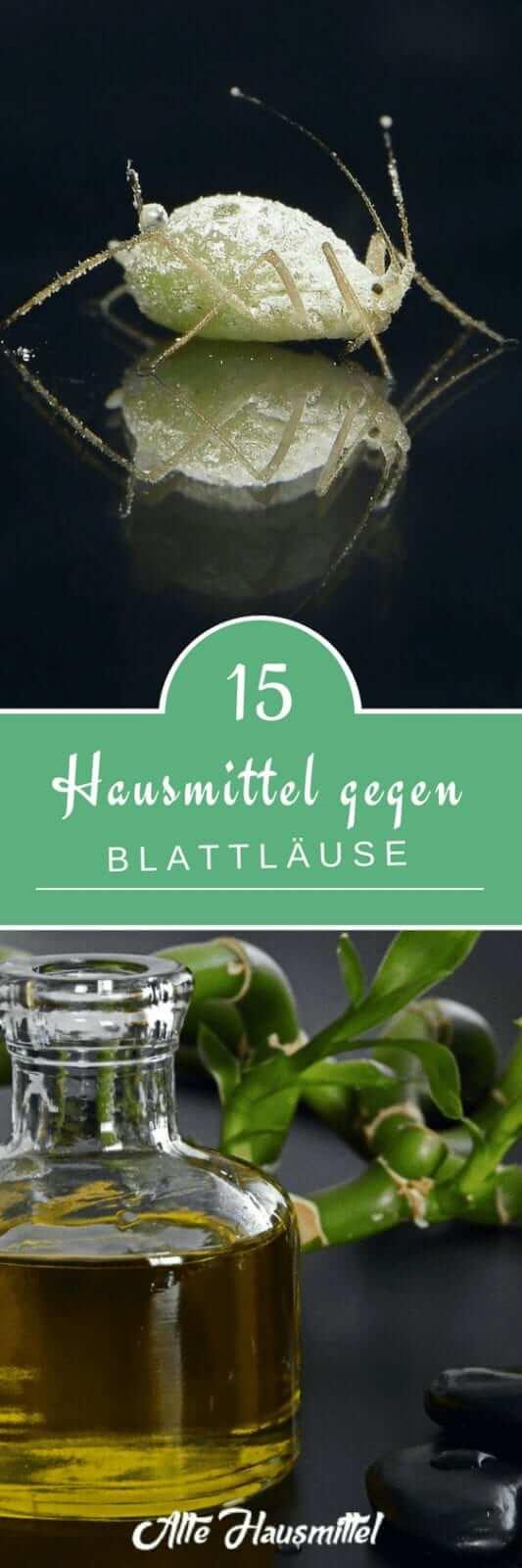 15 Hausmittel gegen Blattläuse