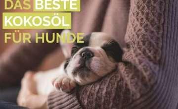 Das beste Kokosöl für Hunde