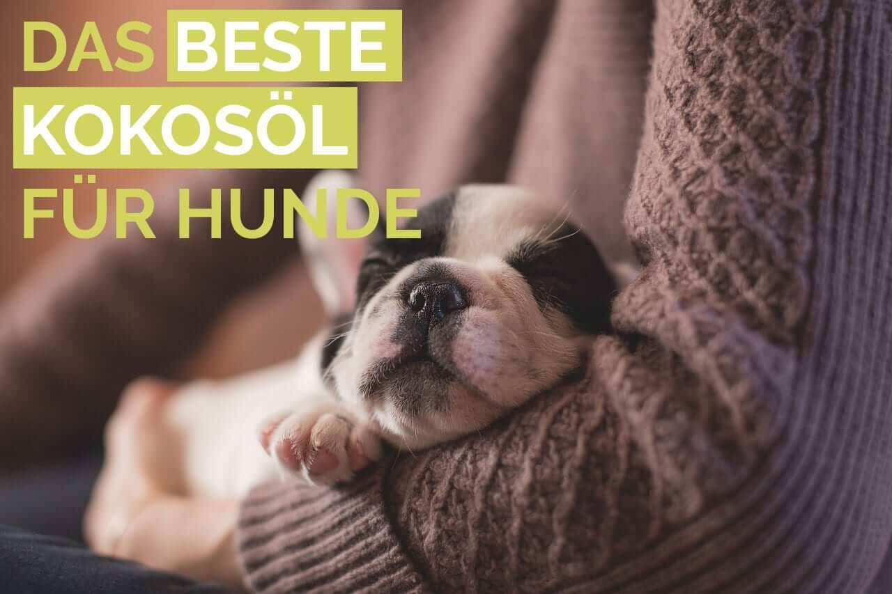 Auf Der Suche Nach Kokos U00f6l F U00fcr Hunde  Hier Sind Die Besten 5