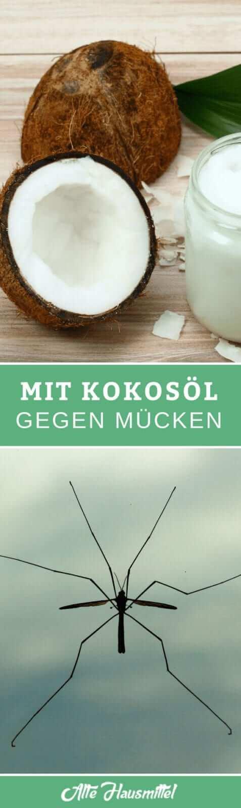 Mit Kokosöl gegen Mücken
