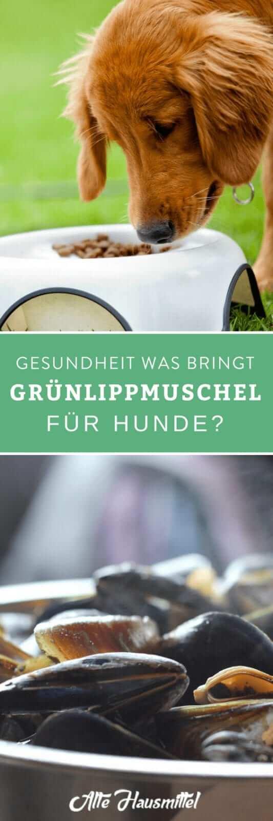 Was bringt Grünlippmuschel für Hunde?