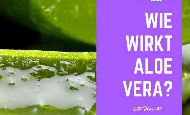 Wie wirkt Aloe Vera