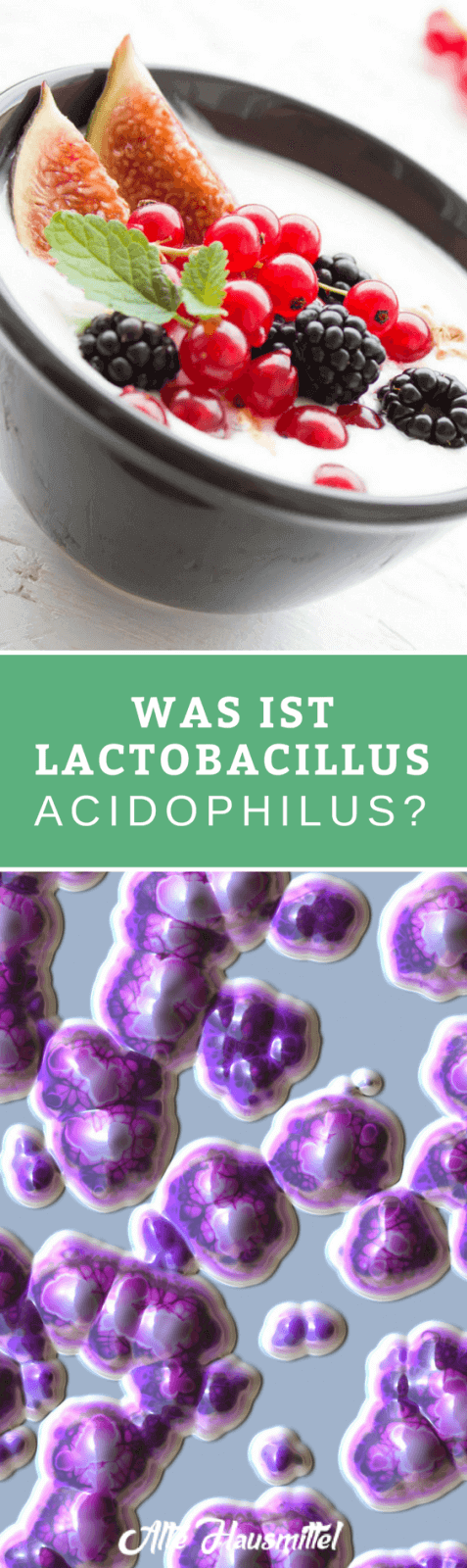 Was ist überhaupt Lactobacillus Acidophilus? ✅ Und warum ist es so unglaublich wichtig für unser Wohlbefinden ✅ Erfahren und lernen Sie mehr ✅