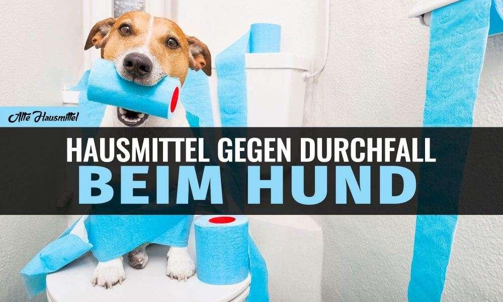 Hausmittel gegen Durchfall beim Hund