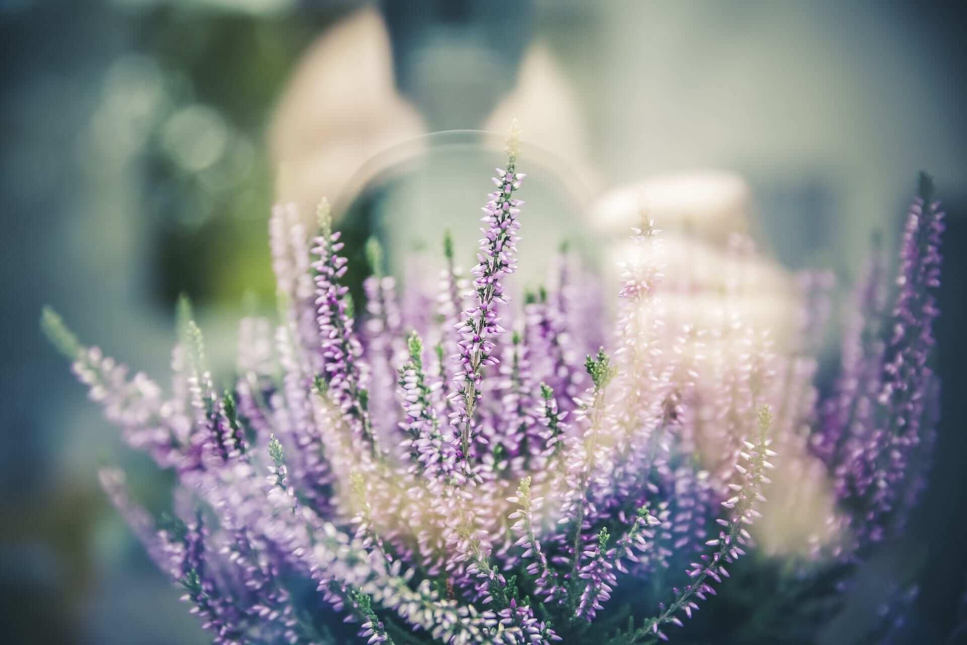 Lavendelöl bei Schlafproblemen