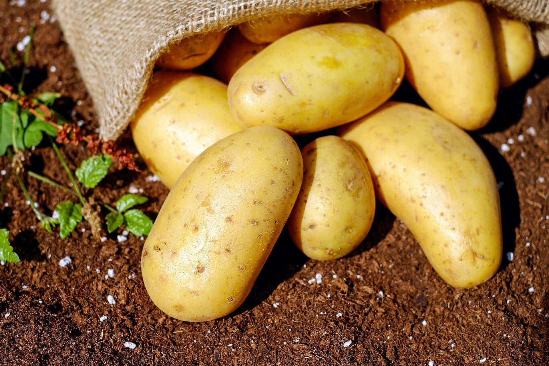Kartoffelsaft gegen dehnungsstreifen